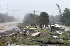 Mỹ điều hàng chục nghìn nhân viên khôi phục lưới điện sau bão Irma