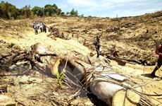 Bắt tạm giam 2 hai nghi phạm về hành vi hủy hoại rừng Bình Định