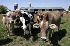 Khí methane - Thách thức trong cuộc chiến chống ấm lên toàn cầu