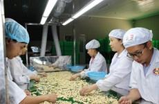 Xác định ba thách thức lớn đối với ngành điều Việt Nam