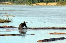 Phát hiện và thu giữ hàng chục phách gỗ lậu trên sông Thu Bồn
