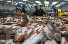 Tìm giải pháp hồi phục xuất khẩu cá tra ở thị trường EU