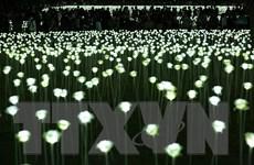 Đèn LED chính là thủ phạm gây ô nhiễm ánh sáng trên toàn cầu