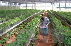 Cách mạng 4.0 trong nông nghiệp: Đi tìm cách tiếp cận hợp lý