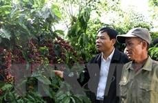 Việt Nam tập trung chế biến sâu, gia tăng giá trị ngành càphê