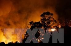 """Mỹ ban bố tình trạng thảm họa do """"giặc lửa"""" tại California"""