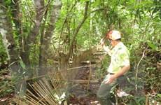 Kon Tum thả 27 cá thể động vật hoang dã về môi trường tự nhiên