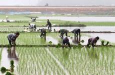 Hơn 50% diện tích Trung du và Đồng bằng Bắc bộ đã có nước cho gieo cấy