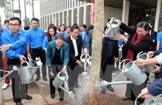 Điện Biên trao tặng 40 cây hoa ban trồng tại khu vực Nhà Quốc hội