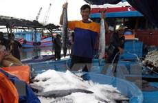 Ngư dân ven biển phấn khởi trúng đậm vụ cá đầu năm