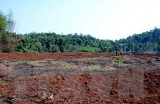 Vụ phá rừng tại Đắk Nông: Kiến nghị xử lý trách nhiệm của chủ rừng