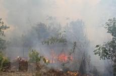 Xác định nguyên nhân vụ cháy 50ha rừng thông tại Gia Lai