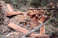 Đắk Lắk yêu cầu chủ rừng rà soát toàn bộ diện tích rừng bị phá