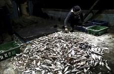 Israel tạm thời mở rộng phạm vi khu vực đánh bắt cá ở Dải Gaza