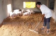 Tháo gỡ khó khăn cho ''thủ phủ'' nuôi lợn lớn nhất miền Bắc