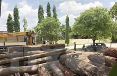 Vụ bắt giữ gỗ lậu quy mô lớn tại Đắk Nông: Khởi tố, tạm giam 5 bị can