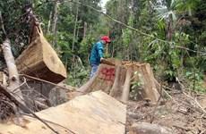 Kỷ luật các cán bộ kiểm lâm để xảy ra phá rừng ở Quảng Nam