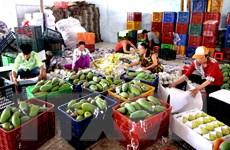Giá trị xuất khẩu rau quả tăng gần 30% trong 4 tháng đầu năm