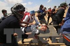 Palestine quyết định kiện Israel gây ra tội ác chiến tranh