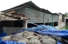Mở lại phiên tòa xét xử vụ buôn bán hơn 10 tấn rùa biển tại Nha Trang