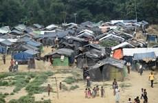 Nhiều người tị nạn Rohingya tại Bangladesh tự nguyện hồi hương