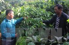Hiến 4.000m2 đất cho phong trào xây dựng nông thôn mới ở Đắc Nông