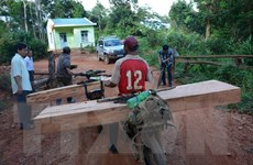 Vận chuyển gỗ không rõ nguồn gốc, bị chính khúc gỗ đè chết tại chỗ
