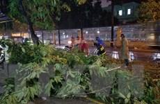 TP. Hồ Chí Minh: Giông lốc bất ngờ, hàng loạt cây xanh bị ngã đổ