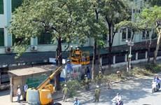 Hà Nội: Rà soát, xử lý các cây bị sâu mục, ngăn ngừa tai nạn đáng tiếc