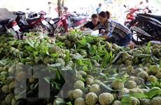 Nâng chất để đẩy mạnh xuất khẩu sang thị trường Trung Quốc