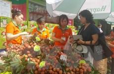 Khai mạc Tuần lễ vải thiều Thanh Hà Hải Dương tại Hà Nội