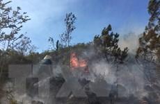 Nghệ An: Đã dập tắt hoàn toàn vụ cháy rừng tại huyện Diễn Châu