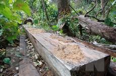 Gia Lai: Khởi tố 8 vụ phá rừng, khai thác rừng trái phép từ đầu 2018