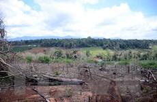 Đắk Nông: Chấm dứt Dự án Quản lý rừng của Hợp tác xã Hợp Tiến