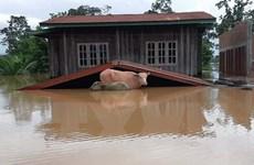 Lào thiệt hại nặng nề về người và của do hậu quả lũ lụt