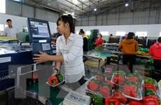 Trái cây sạch cho thị trường nội địa: Nền tảng thúc đẩy xuất khẩu