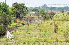 Long An: Khởi tố vụ án bao chiếm đất công ở xã Thạnh Lợi