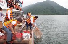 Thả hơn 60.000 con cá giống bổ sung nguồn lợi thủy sản hồ Hòa Bình