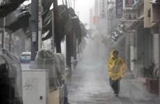 Bão Trami tiến gần đất liền Nhật Bản, hơn 900 chuyến bay bị hủy