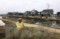 10 năm Chiến lược biển: Khai thác thế mạnh về thủy sản