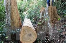 Phát hiện vụ phá rừng lấy gỗ trái phép tại Bình Phước