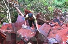 Hà Giang: Rừng đặc dụng Phong Quang ngang nhiên bị ''xẻ thịt''
