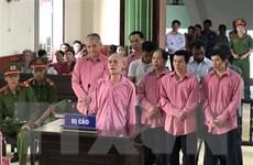 Tuyên phạt các bị cáo trong vụ phá hơn 64ha rừng ở Bình Định