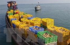 Quảng Ninh: Bắt giữ và tiêu hủy 50.000 con gà giống nhập lậu