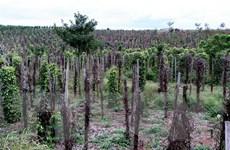 Australia hỗ trợ Đắk Nông phát triển cây càphê và hồ tiêu