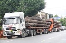 Quảng Nam: Phát hiện 4 xe container chở nhiều cây gỗ lớn không giấy tờ