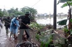 Thiệt hại do mưa lũ, Quảng Nam khẩn trương khôi phục vườn hoa Tết