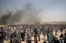 Phái đoàn Hamas sẽ đến Nga bàn về tiến trình hòa giải dân tộc