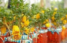 Hoa nhập và cây kiểng biến tấu hút khách dịp Tết Nguyên đán