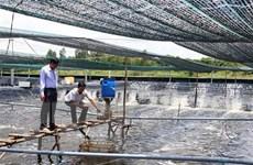 Xây dựng vùng nguyên liệu ổn định cho chế biến tôm xuất khẩu
